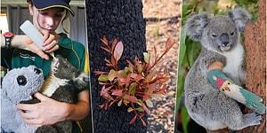 Avustralya'daki Yangın Felaketinin Ardından Kalplerimizdeki Umudu Yeniden Yeşertmeyi Başaran Fotoğraflar
