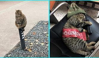 Kedilerin Dünyanın En Garip ve En Komik Canlıları Olduğunu Kanıtlayacak 21 Absürt Kare