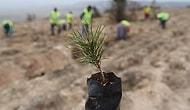 Orman Bakanlığı'ndan Yalanlama Geldi: Dikilen 11 Milyon Fidanın Yüzde 90'ı Kurudu İddiası