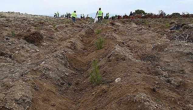 """3. Tarım Orman-İş Sendikası, Tarım ve Orman Bakanlığı'nın 11 Kasım'da """"Geleceğe Nefes"""" adı altında, """"mevsim şartlarını gözardı ederek"""" diktiği 11 milyon fidanın yüzde 90'ının kuruduğunu belirlemişti."""