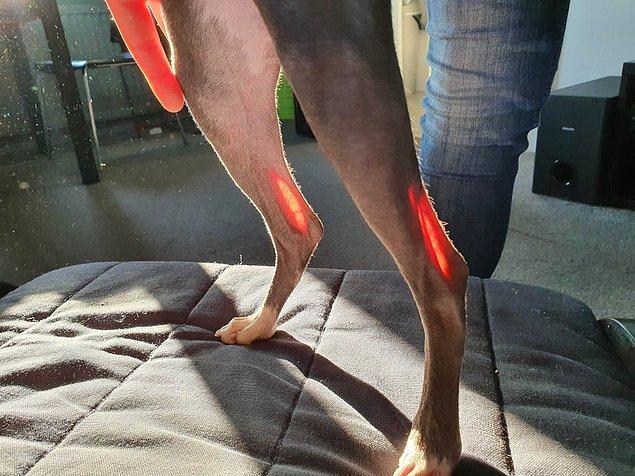 13. Güneş köpeğin bacaklarına vurmuş...