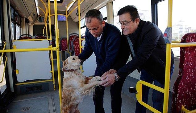 7. Antalya'da bir köpek soğuk nedeniyle halk otobüsüne sığındı. Yolcularla birlikte şehir turu atan köpek görenleri gülümsetti.