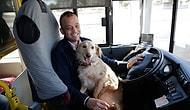 İnsan Dostunu Kaybeden ve Soğuktan Üşüyen Köpek Otobüse Sığındı