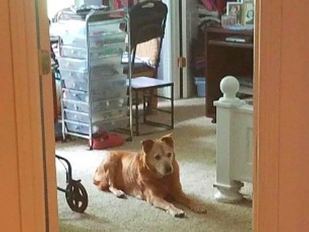 """13. """"Eşimin babaannesi geçtiğimiz gün odasında hayatını kaybetti. Onu her zaman koruyan köpeğim, tüm gün boyunca yolunu gözledi."""""""