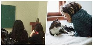 """Minik ve Kaprisli Kedi Dostlarımız Neden Kendilerine """"Pisi Pisi"""" Diye Seslenmemizden Hoşlanıyorlar?"""
