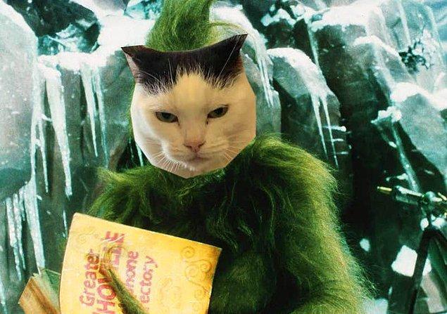 """Lowery, 4 yaşındaki kedinin """"Grinch karakteri gibi Noel arifesinde barınağa geldiğini ve hızlı bir şekilde barınağın hâkimi olduğunu"""" iddia etti. 😂"""