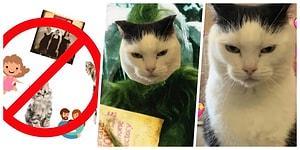 """""""Dünyanın En Kötü Kedisi"""" Unvanını Kazanan, Şahsına Münhasır Barınak Kedisi Perdita Yuva Arıyor!"""