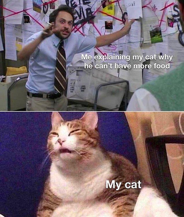 """9. """"Kedime neden daha fazla mama yiyemeyeceğini anlatıyorumdur o sırada kedim:"""""""