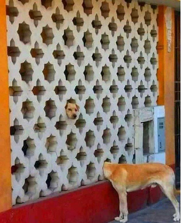 15. Bizi korkutmayın köpekler.