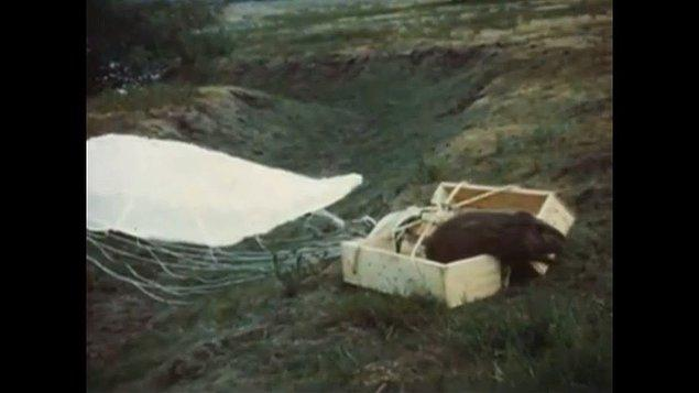 3. 1940 yılında Idaho Balık ve Av Depratmanı kunduzları uçaklardan paraşütle atarak vahşi doğaya salmıştır.