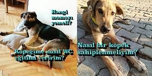 Köpeği Olanların ya da Sahiplenmek İsteyenlerin Eğitim, Besleme ve Sağlık Konusunda Bilmesi Gereken Her Şey