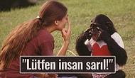 İnsanlar Dışında İlk Kez İşaret Dilini Kullanan Şempanze Washoe'nun İlham Verici Hayat Öyküsü