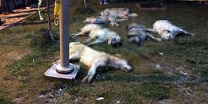 16 Köpeği Zehirle Katletmişlerdi: 10'ar Yıl Hapis Cezasına Çarptırılarak Tutuklandılar