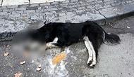Ankara'da 20 Sokak Hayvanını Zehirleyerek Öldüren Kasap Serbest Bırakıldı