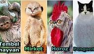 'Bütün Hayvanların Yüzü Kediler Gibi Görünseydi Nasıl Olurdu?' Sorusuna Cevap Niteliğinde Oluşturulmuş 25 Photoshop