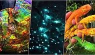 Doğanın Renkleri Birbirine Katarak Oluşturduğu Harikaları Gözleri Önüne Serdiği Anlar