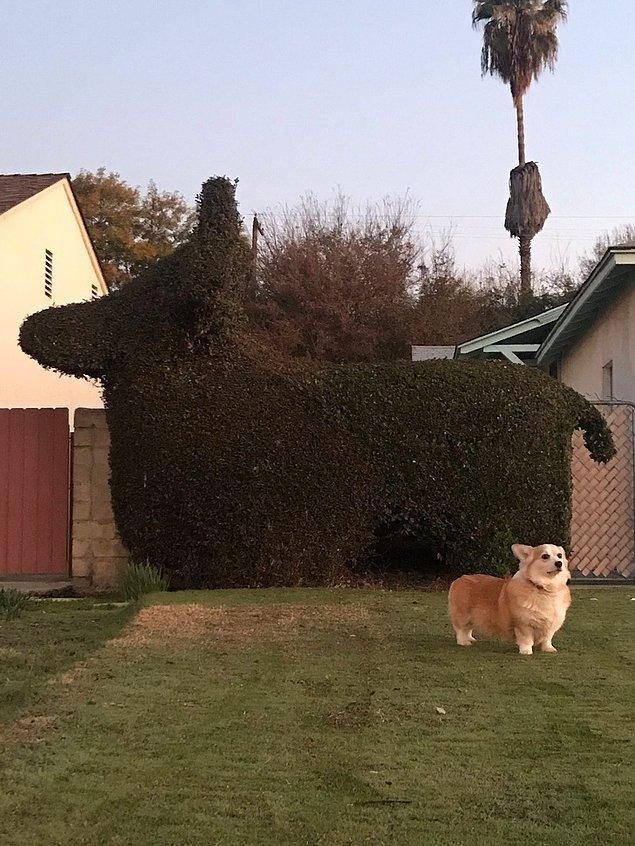 """3. """"Komşularım Luna'nın büyük birer hayranı!"""""""