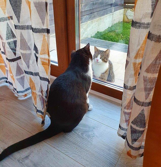 """9. """"Komşumun kedisi her gün aynı saatte ziyaret ediyor."""""""