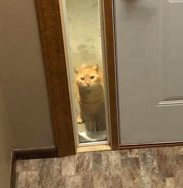 """11. """"Sadece bir kere komşumun kedisine miyavladım ve artık düzenli bir şekilde kapımızın önüne gelip nasıl yaşamlar sürdüğümüzü izliyor."""""""