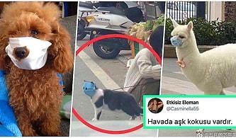 Çin'deki Corona Felaketinin Boyutlarını Gözler Önüne Seren Maskeli Kedi Sosyal Medyada Viral Oldu!