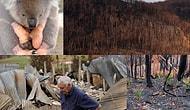 Avustralya'daki Orman Yangınlarının Bilançosu: Halkın Yüzde 75'i Etkilendi, Yıllarca Hasarıyla Yaşayacaklar