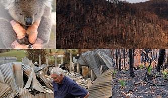 Avustralya'daki Orman Yangınlarının Bilançosu: Halkın Yüzde 75 Etkilendi, Yıllarca Hasarıyla Yaşayacaklar