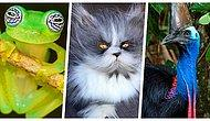 Kendilerine Has Özellikleriyle Gerçekliğini Sorgulayacağınız 17 Eksantrik Hayvan Türü
