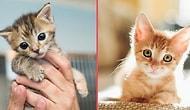 Sevmek Başka, Bakmak Başka! Bakalım Sen Kedi Bakımı Hakkında Ne Kadar Bilgilisin?