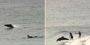 Sörf Yapan İnsanlarla Yarışan Yunusların Muhteşem Görüntüleri!
