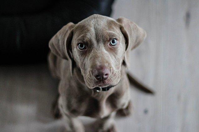 """4. """"Komşuma köpeğim korktuğu için duvara vurmamasını rica ettiğimde,  köpeğim havladığı için duvara vurduğunu söylemişti."""""""