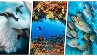 Büyülenerek Bakacaksınız! '2020 Su Altı Fotoğrafçılık Yarışması' Kazananları Belli Oldu