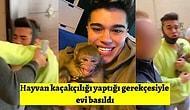 Sosyal Medya Fenomeni Meriç İzgi'nin Maymunu Koko, Vahşi Olduğu Gerekçesiyle Evi Basılarak Zorla Elinden Alındı!