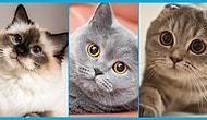 Haylaz ve Sevgi Pıtırcığı Kedi Dostlarımızın Birbirinden Minnoş Türleri