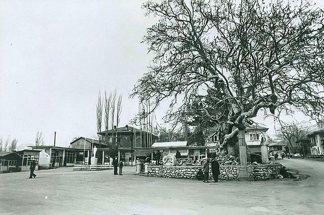 5. Ağlasun Cumhuriyet Meydanı ve 11 asırlık çınar ağacı, Burdur, 1960.