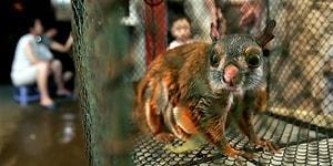 Çin'de Koronavirüsün Ortaya Çıktığı Vahşi Hayvan Pazarları Yeniden mi Açılıyor?