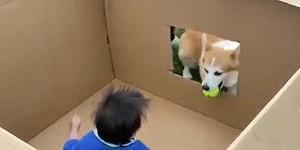 Köpeğiyle Oyun Oynayan Ufaklığın Aşırı Mutlu Anları