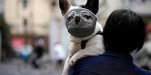 Dünya Sağlık Örgütü: 'Evcil Hayvanlardan İnsana Koronavirüs Bulaştığı Yönünde Veri Yok'