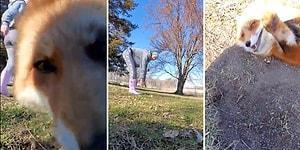 Spor Yaparken Kendini Kaydetmek İsteyen Kadının Telefonunu Alıp Kaçan Sevimli Tilki