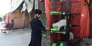 Pakistan'da Koronavirüs Nedeniyle Kapatılan Dükkanlarda Yüzlerce Evcil Hayvan Açlıktan Öldü