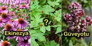 Şifayı Doğada Arayanların Bilmesi Gereken Birbirinden Yararlı 8 Doğal Antibiyotik