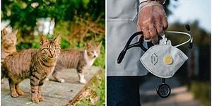 Yapılan Son Araştırmalara Göre Sevimli Minik Dostlarımız Kedilere de Sars-Cov-2 Bulaşabiliyor!