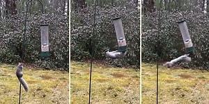 Kuş Yemlerine Dadanan Sincabın Hayatının En Büyük Dersini Aldığı Anlar