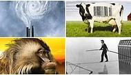Dünyaya Bakış Açınızı Değiştirip Ufkunuzu Genişletecek 35 Muazzam Belgesel