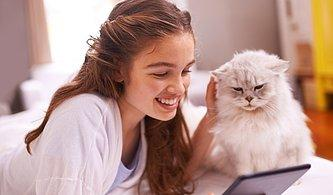 Evde Geçen Günlerinde Kedin Seninle Birlikte Olmaktan Ne Kadar Mutlu?