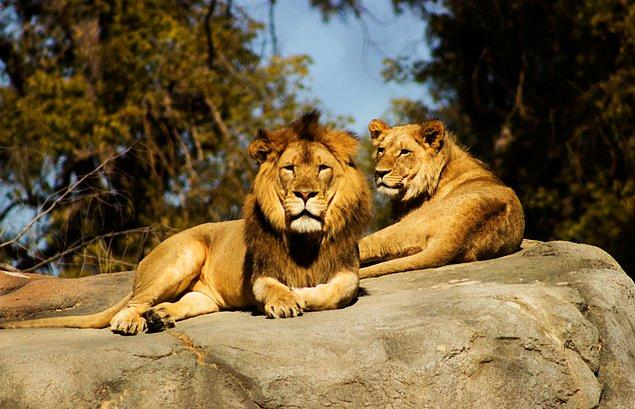Neumünster Hayvanat Bahçesi yaşadıkları finansal sıkıntıdan dolayı bazı hayvanları yaşatabilmek için diğerlerini öldürmek durumunda kalabileceklerini açıkladı!