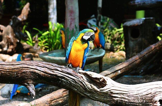 Bu hayvanat bahçesi, küçük işletmeler için devlet acil durum fonu kapsamına girmeyen bir derneğe ait.