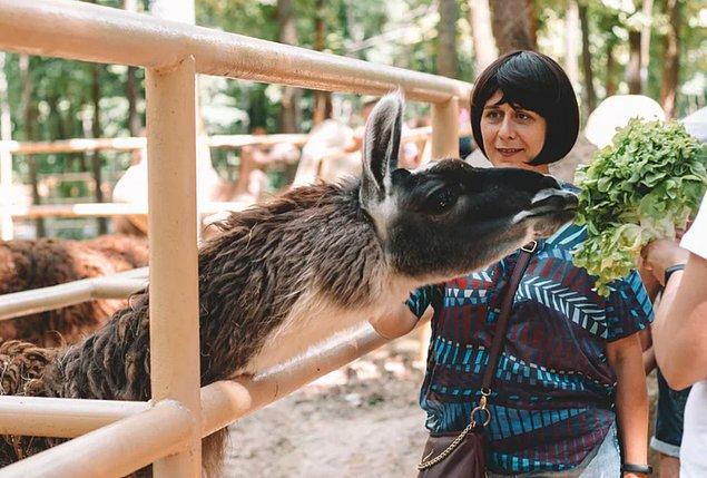 DHA'nın yapmış olduğu habere göre ise  Almanya'daki hayvanat bahçeleri, kamu bağışlarının yanı sıra, yaklaşık 100 milyon euro değerinde yardım talep ediyor.