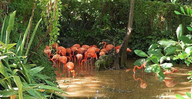 Viyana'nın en gözde mekanlarından biri olan Schönbrunn Hayvanat Bahçesi ise mevcut kaynaklarından yararlanarak şimdilik idare edebileceğini açıkladı.