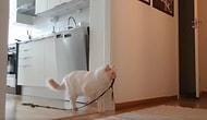 Evde Olmadığı Zamanlarda Kedisinin Ne Yaptığını Merak Eden Kişinin Kaydettiği İlginç Görüntüler