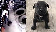 Yavru Köpek Dora'yı Yere Vurarak Öldüren Kişiye Ev Hapsi Kararı